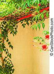 природа, цветы, красивая, парк, задний план