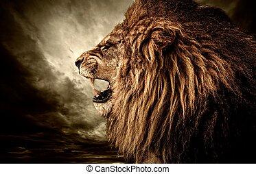 против, небо, запал, штормовой, лев