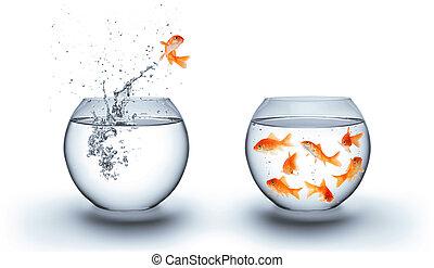 прыжки, воды, вне, золотая рыбка