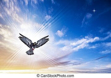 птица, ангел, небо