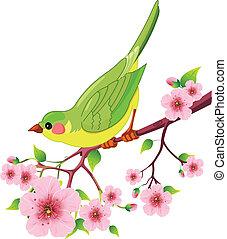 птица, весна