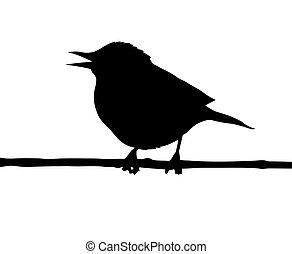 птица, филиал, вектор, силуэт