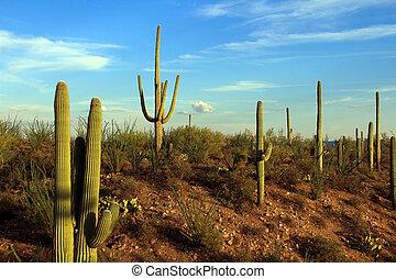 пустыня, аризона
