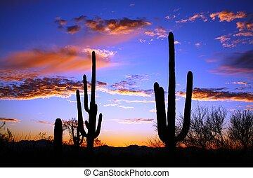 пустыня, закат солнца, цереуса