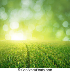 путь, зеленый, весна, луг, dream.