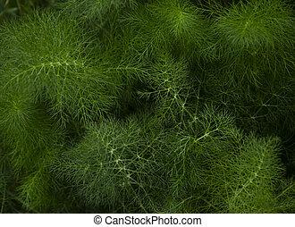 пушистый, растение