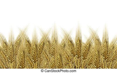 пшеница, уборка урожая, горизонт