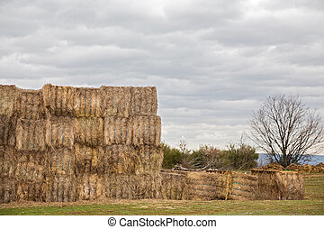 пшеница, уборка урожая