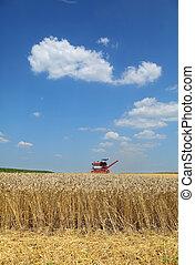 пшеница, уборка урожая, сельское хозяйство, скомбинировать