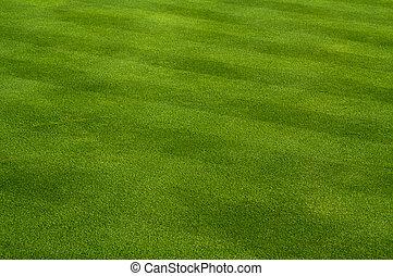 пышный, трава, зеленый