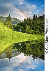 радуга, над, лес