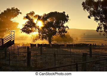 рано, утро, крупный рогатый скот