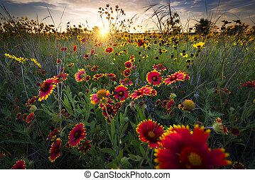 рассвет, wildflowers, над, техас, свежий