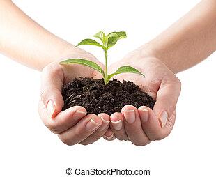 растение, -, белый, задний план, руки