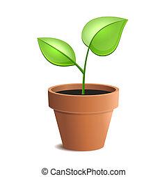 растение, горшок, молодой, isolated, вектор, зеленый, backgrounds., белый