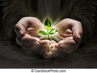 растение, концепция, легкий, руки