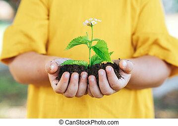 растение, немного, рост, сельское хозяйство, child., concept., руки
