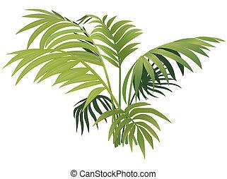 растение, папоротник