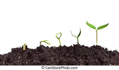 растение, рост, прорастание