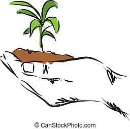 растение, рука, иллюстрация, подвешивание