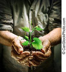 растение, руки, зеленый, держа, фермер