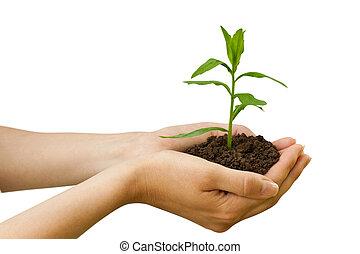 растение, agriculture., рука