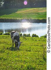 река, корова