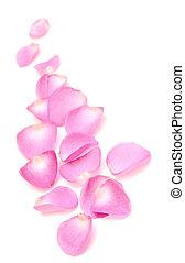 роза, граница, petals