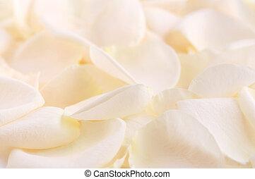 роза, petals