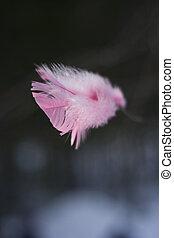 розовый, перо, крупным планом
