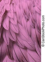 розовый, пушистый, крупным планом, перо