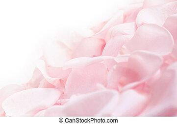 розовый, роза, petals