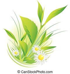 ромашка, натуральный, plants