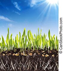 рост, задний план, -, почва, концепция