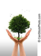 рука, в живых, дерево, -