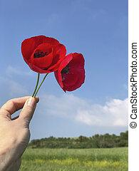 рука, красный, держа, цветы, против, синий, мак, небо