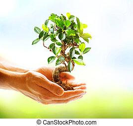 руки, держа, над, задний план, зеленый, человек, природа, растение