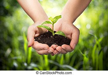 руки, задний план, трава, -, растение