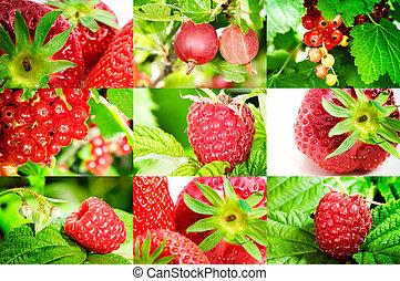 свежий, berries, органический