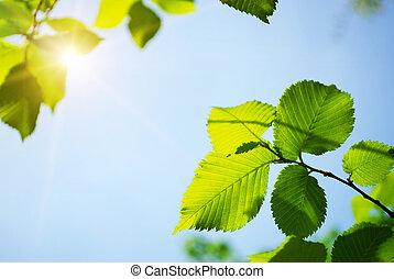 свежий, leaves, зеленый, солнечный лучик