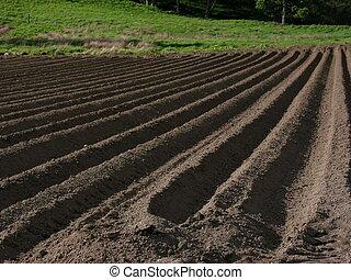 свежий, ploughed, поле