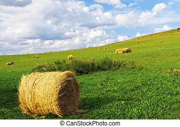сельская местность, золотой, bales