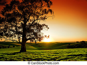 сельский, закат солнца