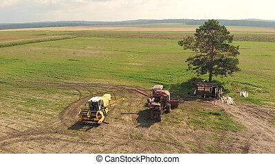 сельское хозяйство, посмотреть, harvesters, поле, антенна, широкий, коричневый, трутень, скомбинировать