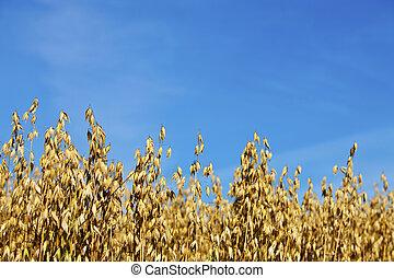 сельское хозяйство, финский