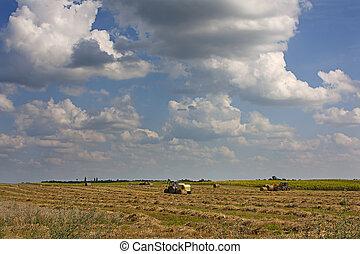 сельское хозяйство, undar, небо, большой