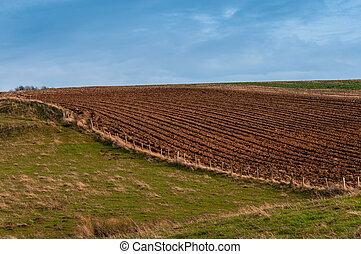 сельскохозяйственное, луг, ploughed, поле
