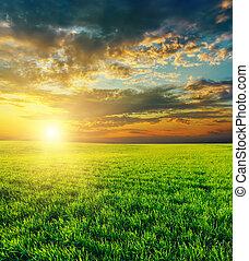 сельскохозяйственное, над, закат солнца, зеленый, поле