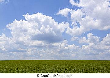 сельхозугодий, задний план
