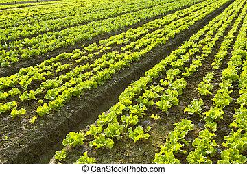 сельхозугодий